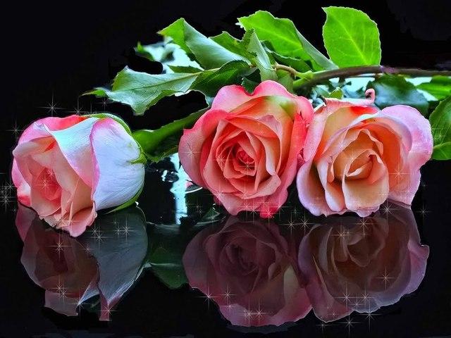 Ruže - Page 2 11869188