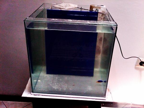 Belajar Cube 45 Indonesia S Saltwater Aquarium Hobbyist