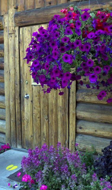 Cvijeće oko kuće  - Page 2 12305813