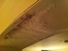 ask the trades white powder mold in basement