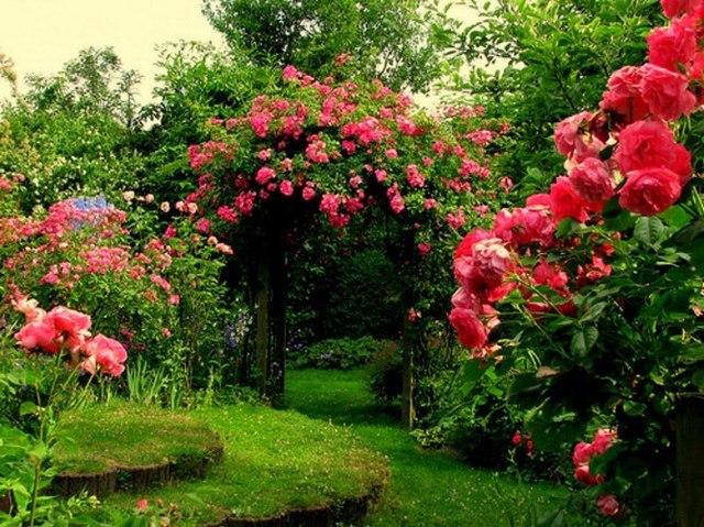 Cvijeće oko kuće  - Page 2 12701528