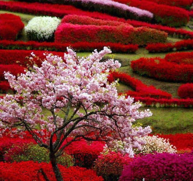 Čarobni vrt 12884093