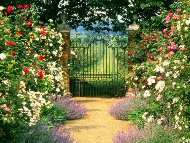 Cvijeće oko kuće  - Page 3 13393518