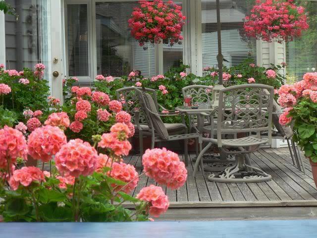Cvijeće oko kuće  - Page 3 13393638
