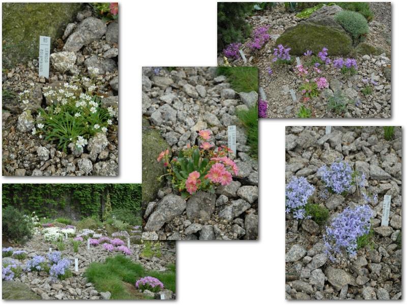 Rock' Gardener Club Prague 1711838