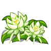 8088038 April Showers Day 12: Night Cereus Seed Packages & Bonus Prize!