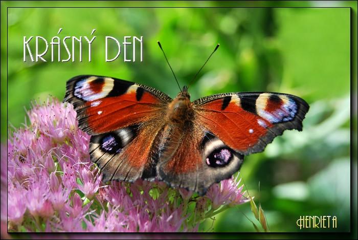 An den Beitrag angehängtes Bild: http://www5.picturepush.com/photo/a/8977943/img/8977943.jpg